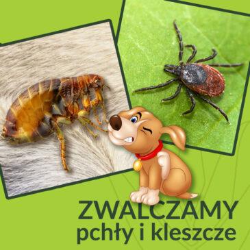 Jak chronić naszych pupili przed kleszczami i pchłami!